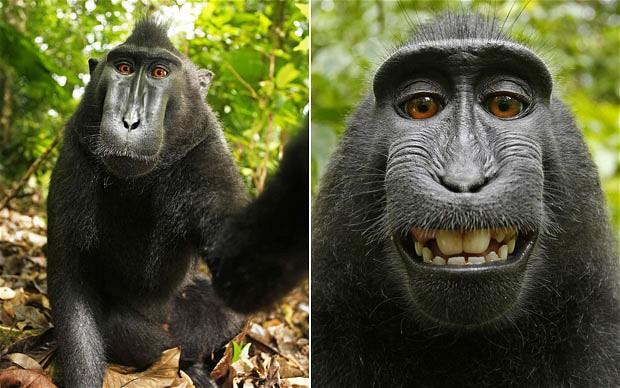 monkey-620_1937620b