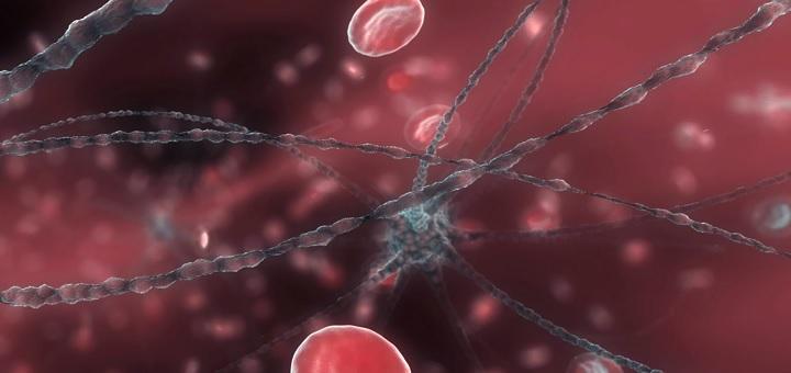 Neuron and RBC
