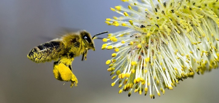 Study digs out evidence proving pesticides killing honey bees