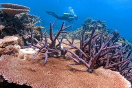 Coral reefs around the world are threatened by climate change, but if corals can evolve higher temperature tolerance their future outlook is much improved. CREDIT Dr. Ray Berkelmans, Australian Institute of Marine Science