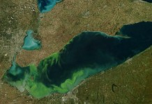 Non-profit organisations propose solutions to stop toxic algal blooms