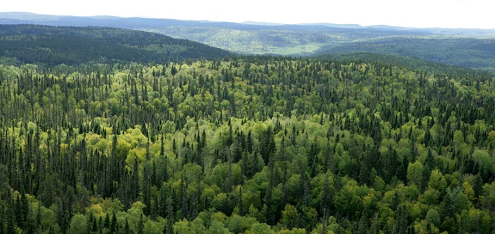 Boreal forests in danger; experts call for transition to adaptive forest management