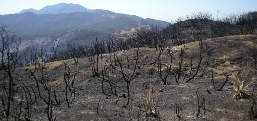 Drought affected forest