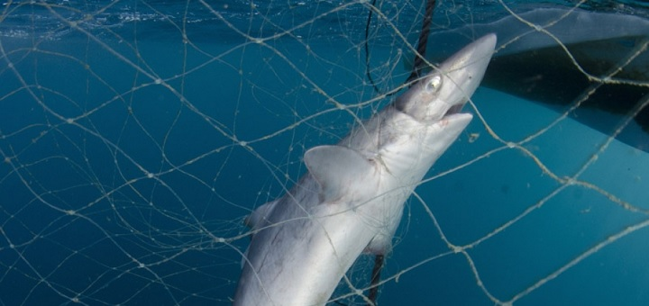Should recreational nets be banned?