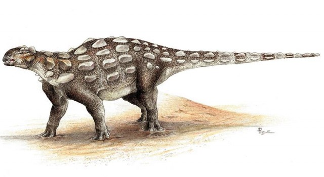 Life illustration of Gobisaurus, an ankylosaur with the stiff tail but no knob of bone at the end. Credit: Sydney Mohr