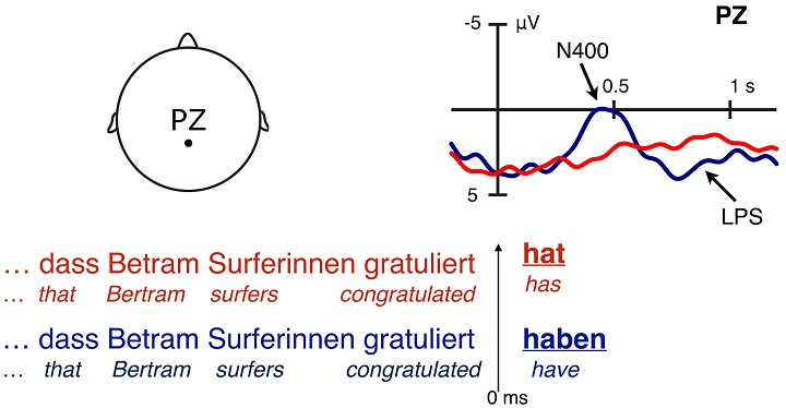 If the first noun in a sentence without a clear case marker (Bertram) does not refer to the agent, the brain activity is stronger (see blue curve). Credit: UZH
