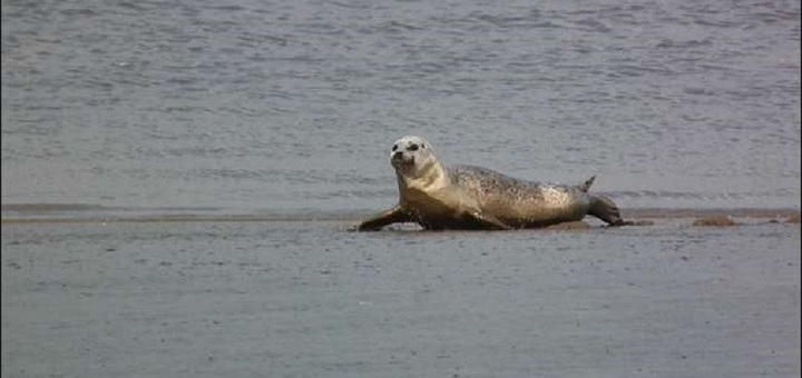 Want to spot some seals in London? Go to Canary Wharf suggests survey