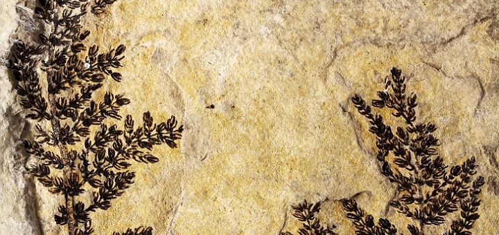 Earliest flowering plant on Earth discovered