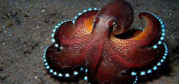 Researchers sequence genome of 'alien' octopus