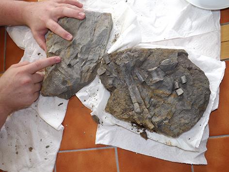 The fossilised dinosaur foot