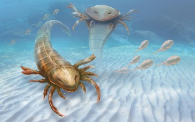 This is an artist's impression Pentecopterus. CREDIT Patrick Lynch - Yale University