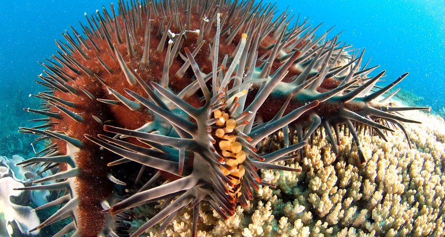 COTSbot to hunt down menacing crown-of-thorns starfish in ...